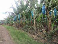 1Hectare FarmLot for Sale in Tugbok Davao City