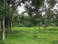 2.4Hectare Farm Lot for Sale in Tugbok District Davao City