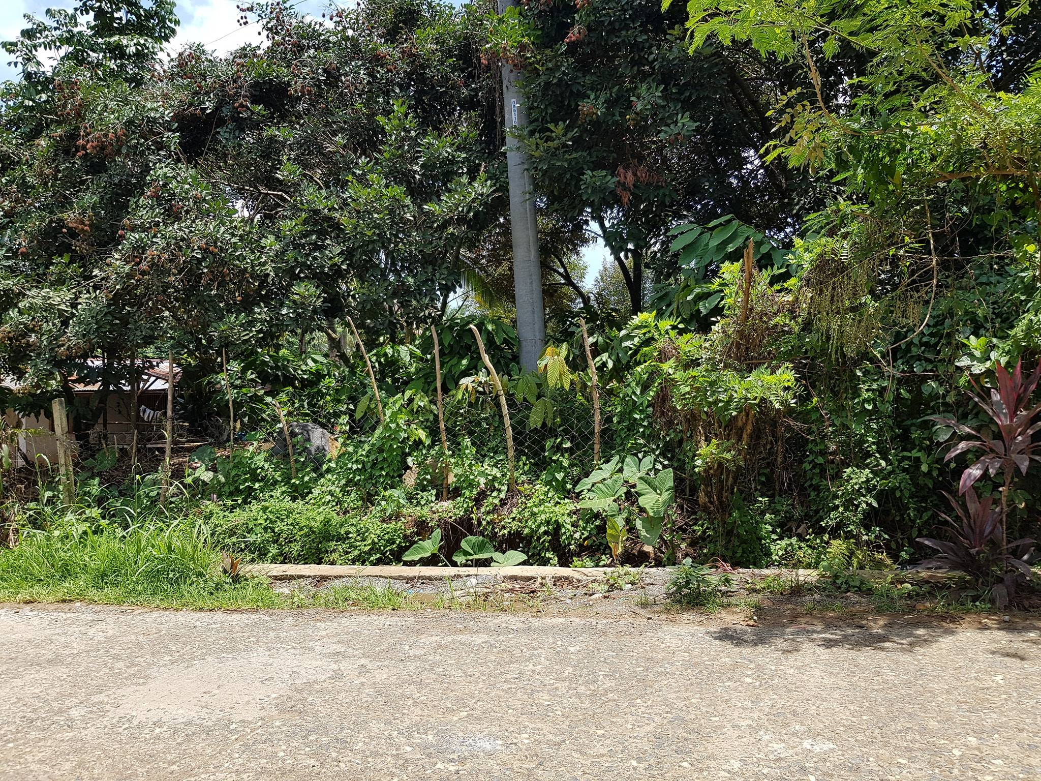 Best Buy Alert! Affordable Farm Land for Sale 2.6 hectares. ...